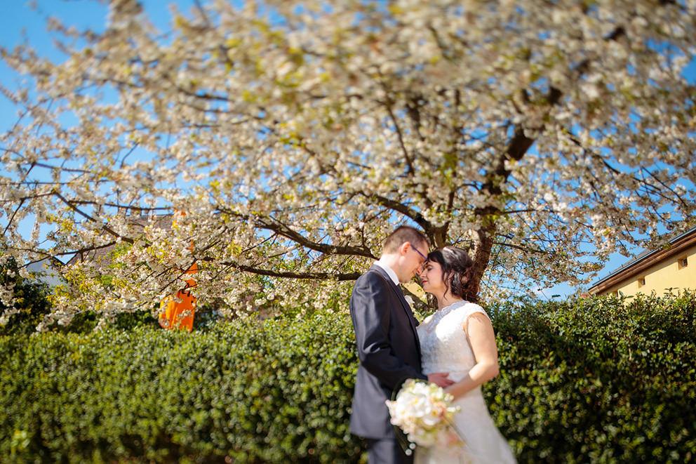 Hochzeitsfotograf Werder Insel mit Hochzeitspaar zur Baumbluete